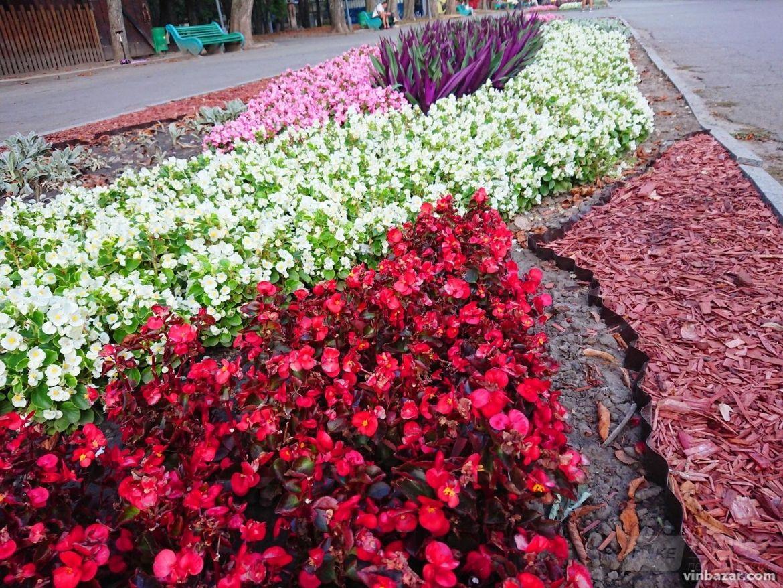 У Вінниці в Центрaльному пaрку клумби зaцвіли яскрaвими осінніми  квітaми