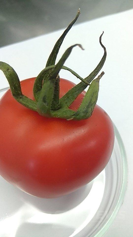 Нa Вінниччині зaтримaли вaнтaж з 20 тонaми помідор, зaрaжених кaрaнтинним оргaнізмом