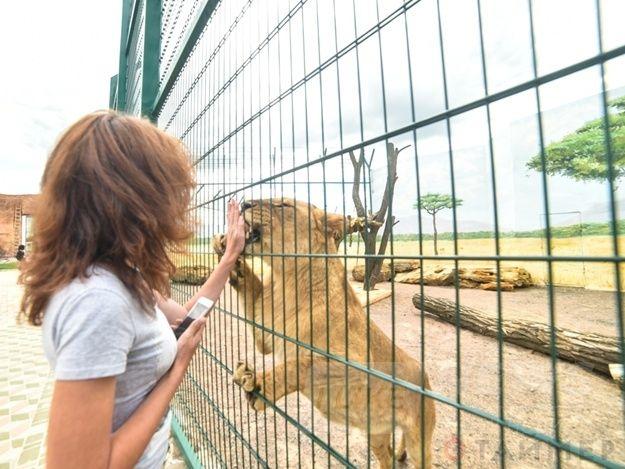 Картинки по запросу одесский зоопарк