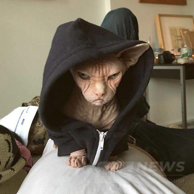 Малий злюка: мордочка цього кота змусить тебе його боятися - фото 379559