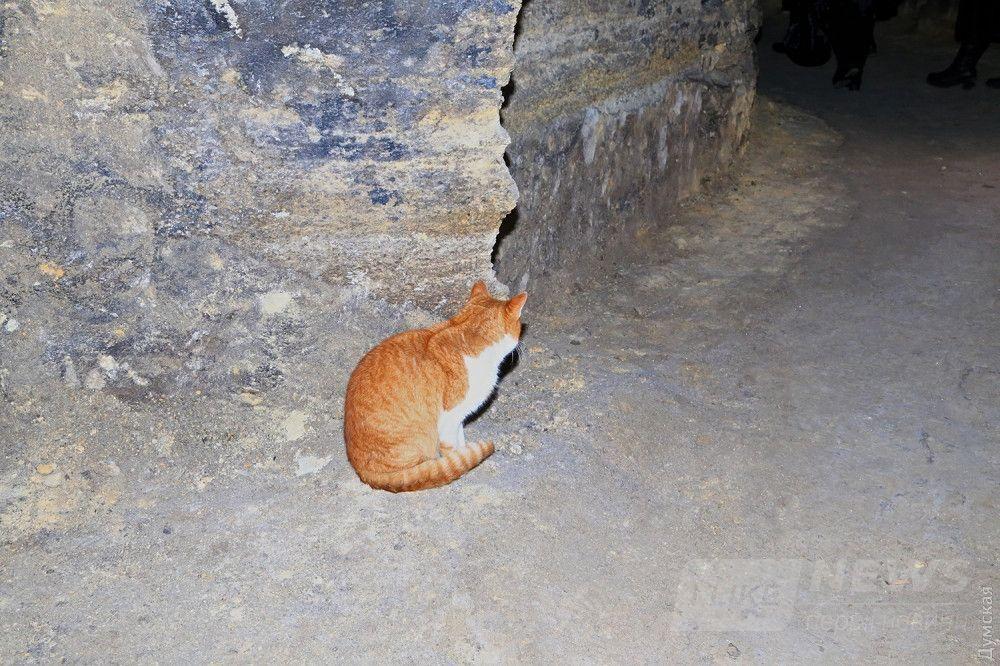 Житель катакомб