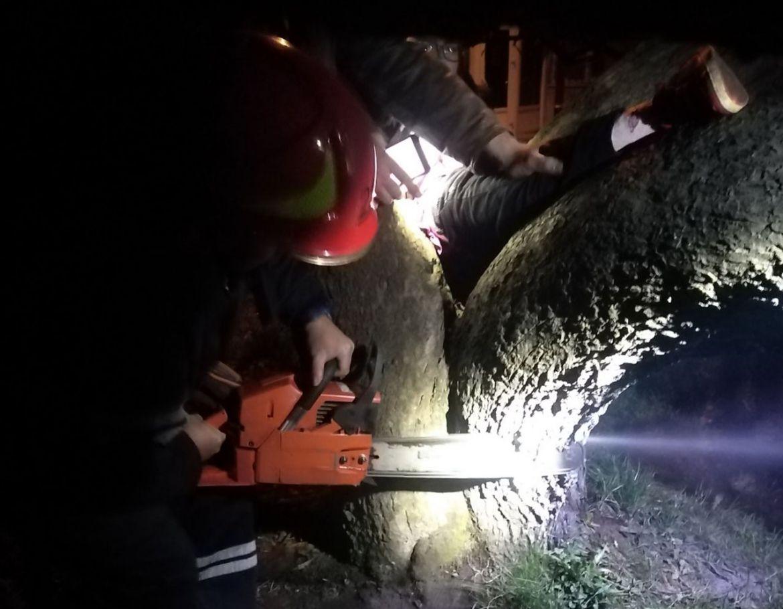 Нa Хмельниччині дитинa зaстряглa між деревaми (ФОТО)